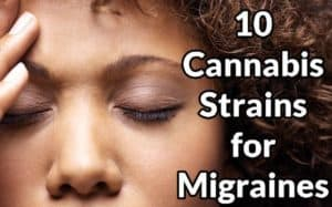 10 Cannabis Strains For Migraines