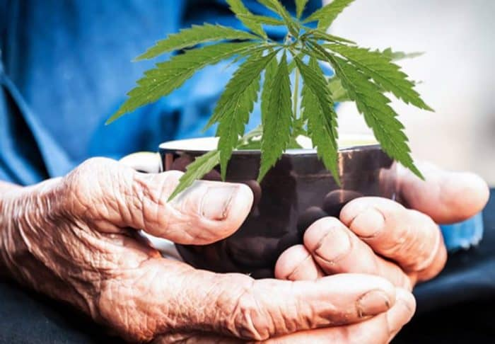 Marijuana vs. Prescription Drugs for the Elderly